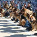 Создан вибропульт управления собакой